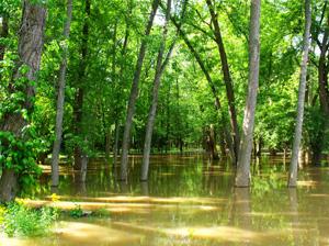 Réunion publique: Plan de Prévention des Risques d'inondation de la Sauldre @ Mairie de Romorantin Lanthenay, Salle du Conseil Municipal | Romorantin-Lanthenay | Centre | France